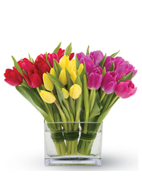 red,yellow,pink tulips
